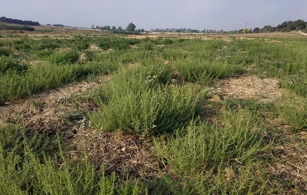 תחום מחקר ניהול עשבים
