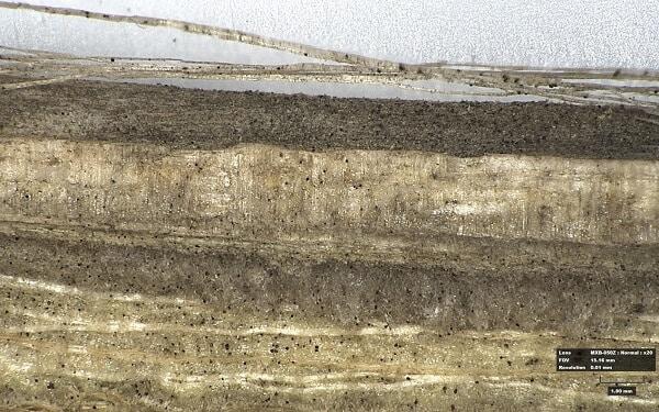 קטע גבעול תחתון של צמח שומשום שנפגע ע'י Macrophomina phaseolina הנקודות השחורות בתוך הצמח ועל קליפתו הם מיקרו-קשיונות הנשמרות על שאריות הצמח החולה ומהוות מידבק לגידול הבא.